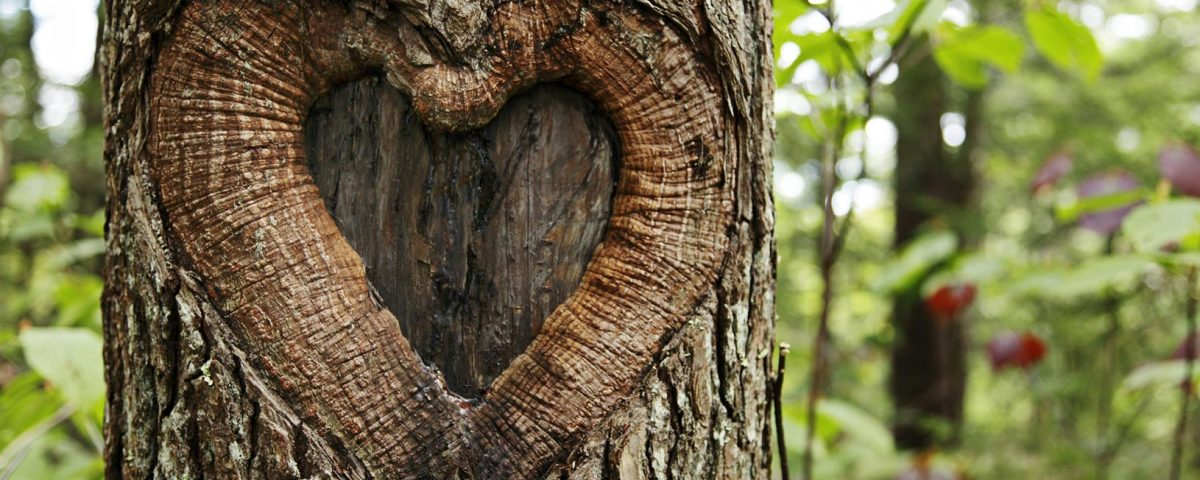 Baum mit Herz | © Friedberg - fotolia.com